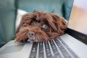 un-chien-repose-sa-tete-sur-le-clavier-d-un-ordinateur.